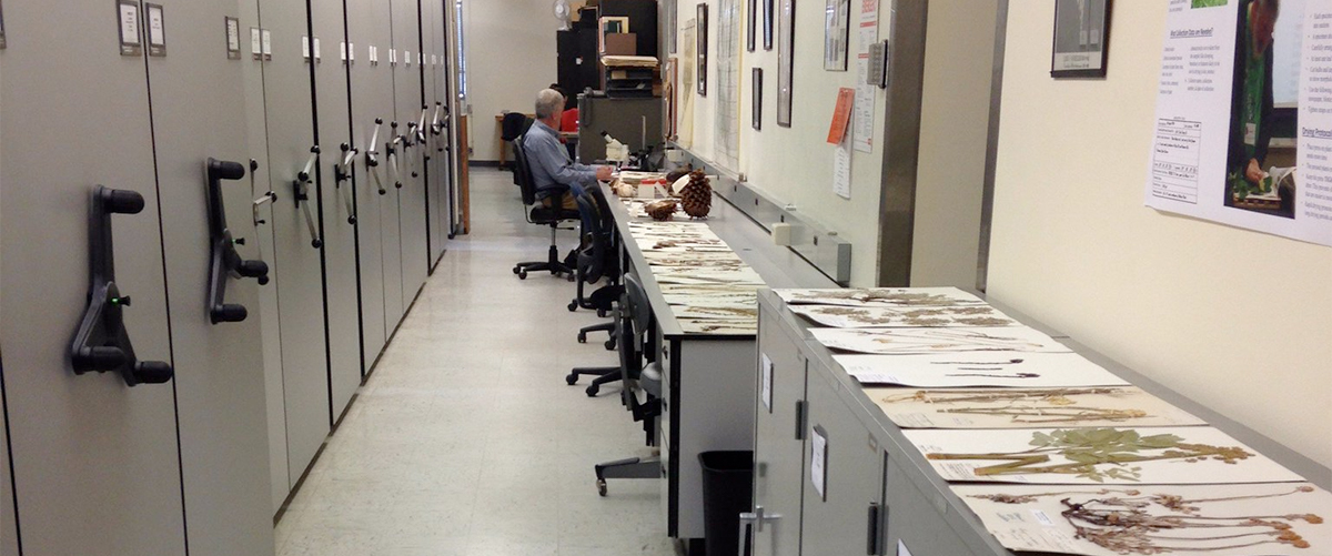 Herbarium work area